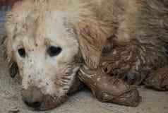 пакостная собака Стоковые Фотографии RF