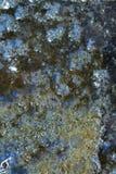 Пакостная текстура на поверхности Стоковые Изображения
