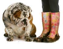 Пакостные ботинки и пакостная собака Стоковые Фотографии RF