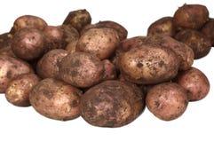 пакостные картошки молодые стоковая фотография rf