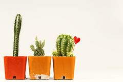 Пакостный бак кактуса для украшения Стоковые Изображения