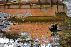 Пакостный водный бассейн, конец-вверх Стоковое фото RF