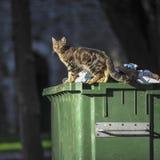 Пакостный кот на контейнере Стоковая Фотография RF