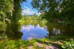 Пакостный пруд в который ветви дерева падают Оно выглядеть как деревья согнуто для того чтобы выпить воду стоковое изображение