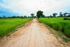 Пакостный путь дороги обрабатывать землю Стоковое Фото