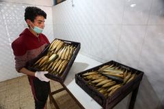 Палестинский человек подготавливает скумбрию куриться в Рафахе в южном секторе Газа стоковое фото