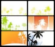 пальма Австралии Стоковое фото RF