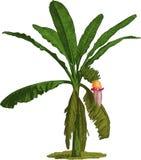 Пальма банана. Вектор Стоковое Изображение RF