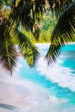 Пальма выходит на красивый тропический пляж intendance Anse рая Крен океанской волны на песчаном пляже с ладонью кокоса стоковые фотографии rf