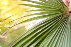Пальма выходит при bokeh сделанное света захода солнца Селективное focu стоковые изображения
