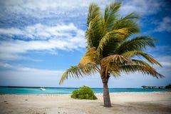 Пальма в гавани Стоковое фото RF
