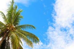 Пальма и голубое небо с белыми облаками Расслабляющий тропический взгляд острова к голубому небу и солнцу Стоковое фото RF