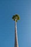 Пальма и голубое небо Стоковые Изображения RF