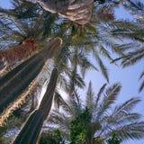 Пальма и кактус в Брисбене, Австралии Стоковая Фотография RF