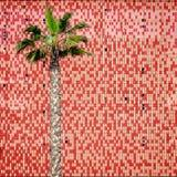 Пальма и крыть черепицей черепицей стена Стоковые Изображения RF