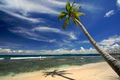 пальма кокоса пляжа тропическая Стоковое фото RF