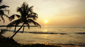 Пальма контура на заходе солнца на океане. Стоковая Фотография
