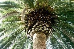 пальма крупного плана стоковые изображения