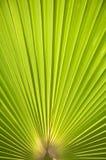 пальма листьев предпосылки Стоковое Фото