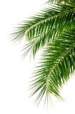 пальма листьев Стоковая Фотография