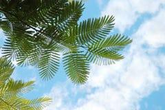 пальма листьев Стоковые Изображения RF