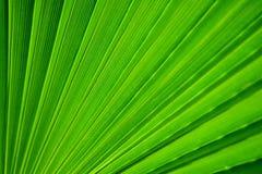 пальма листьев Стоковые Изображения