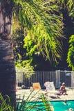Пальма Лос-Анджелес с бассейном в предпосылке Стоковое Изображение RF