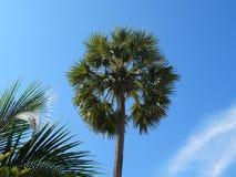 пальма на заднем плане ясного неба Стоковая Фотография RF