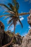 Пальма на карибском пляже в Tulum Мексике стоковое фото rf