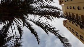 Пальма от здания гостиницы против неба сток-видео