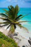 Пальма пляжа бирюзы Tulum в Майя Ривьеры на майяском Стоковые Фотографии RF