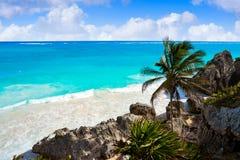 Пальма пляжа бирюзы Tulum в Майя Ривьеры на майяском Стоковые Изображения