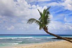 пальма пляжа тропическая Стоковое Изображение