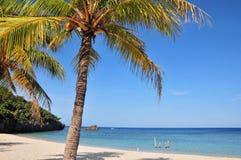 пальма пляжа Стоковое Изображение RF