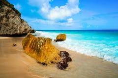 Пальма пляжа Tulum в Майя Ривьеры Стоковое Изображение RF