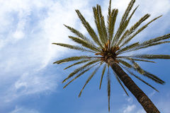 Пальма против голубого солнечного лета Стоковые Изображения RF