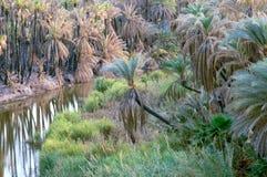 пальма пущи стоковое фото rf
