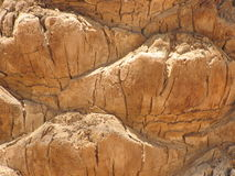 пальма расшивы Стоковые Изображения RF