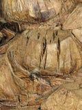 пальма расшивы Стоковая Фотография RF
