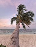 Пальма склонности на острове Мальдивах атолла Raa захода солнца стоковое фото rf