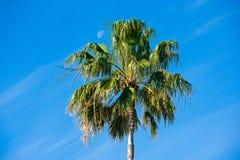 Пальма с луной дневного времени стоковое изображение rf