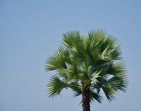 Пальма с фото зеленых листьев уникальным стоковые изображения