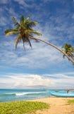 Пальма шлюпки и кокоса Стоковое Изображение RF