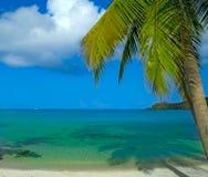 пальма Стоковая Фотография