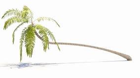 пальма стоковое изображение rf