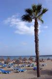 пальма Стоковые Фото