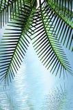 пальма иллюстрация штока