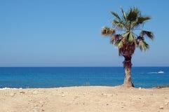пальма Стоковая Фотография RF