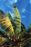 пальма Стоковые Фотографии RF