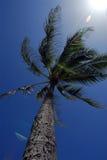 пальма стоковые изображения